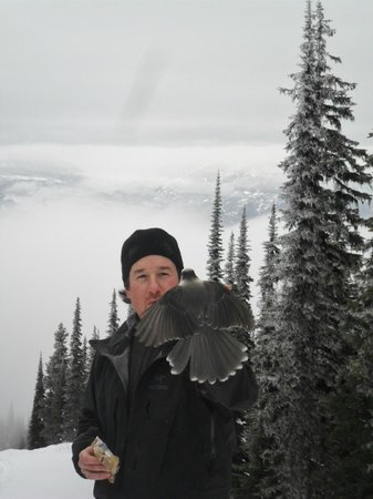 Revelstoke Snowshoe Company: Getting up close with nature!