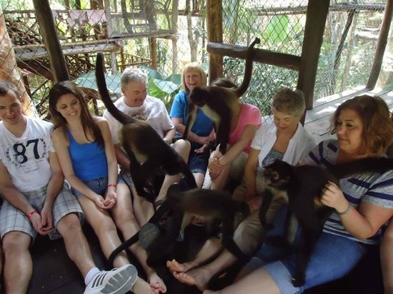 The Jungle Place - Tours: Monkeys playing with our group in the cage