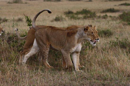 Masai Adventure Camp