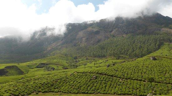 The verdant misty tea gardens in Munnar