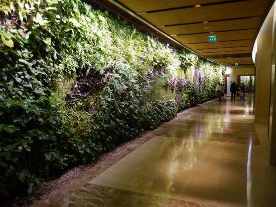 Sofitel Dubai The Palm Resort & Spa : View of living wall leading off main reception area