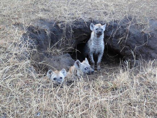 Enkewa Camp: Hyena den