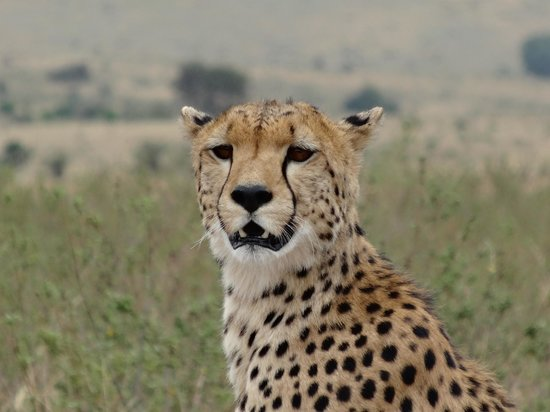 Enkewa Camp : Big cats