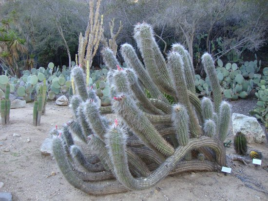 Cacti Picture Of Wrigley Memorial Botanic Garden Avalon Tripadvisor