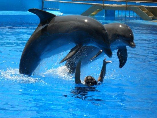 Sumus Hotel Monteplaya: Marineland - delfnárium