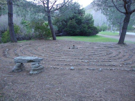 Cactus In Bloom Picture Of Wrigley Memorial Botanic Garden Avalon Tripadvisor