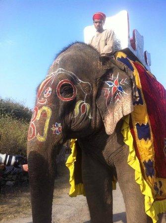 Princess Trails Farm: Auch der schön geschmückte Elefant, die Kamele und Tanzpferde haben nicht gefehlt
