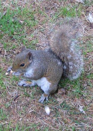 Valentines Park: Squirrel waiting for next nut