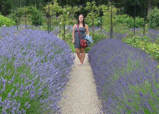 Valentines Park: Lavender Garden