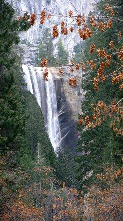 The Majestic Yosemite Hotel: Vernal Falls