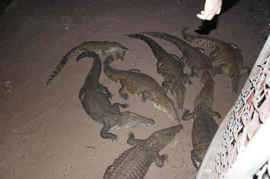 Samburu Game Lodge: feeding time