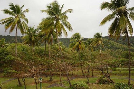 Rosalie Bay Resort: Blick von unserem Zimmer (Junior Suite mit Ocean View)
