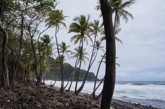 Rosalie Bay Resort: Ausblick vom Zimmer (seitlich)