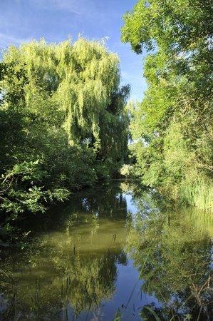 Moulin de Labique : Les étangs