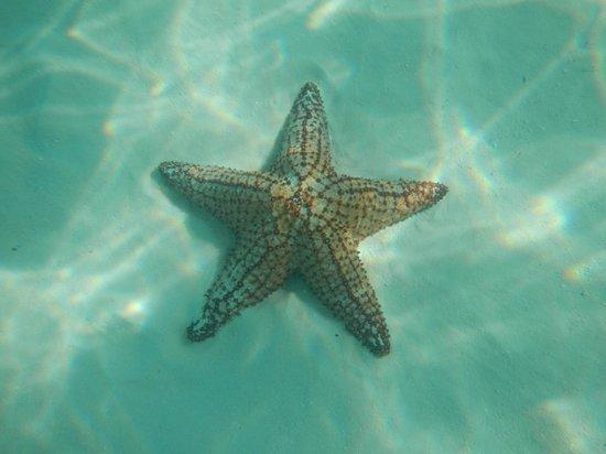 Dreams La Romana: Stella marina!