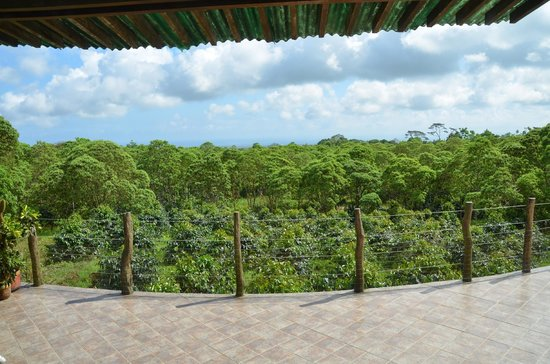 Semilla Verde Lodge & Spa: The view from the terrace