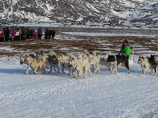 Greenland: ilullisat dog race