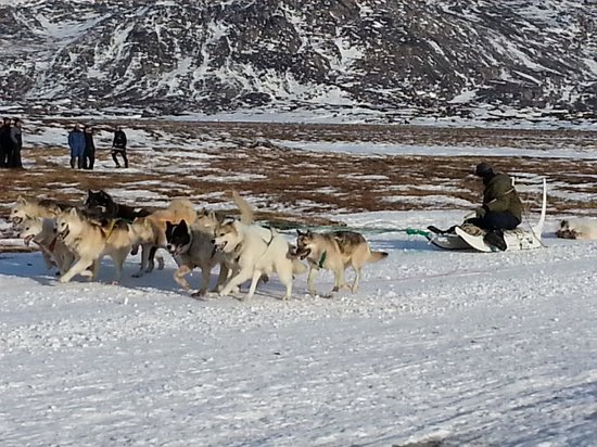 Groenland : dog race ilullisat