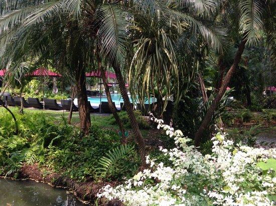 Swissotel Nai Lert Park : Jardin y piscina