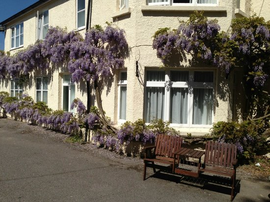 Swallows Eaves Hotel: Wisteria along the hotel
