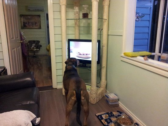 Must Love Dogs B&B & self contained cottage: garden suite