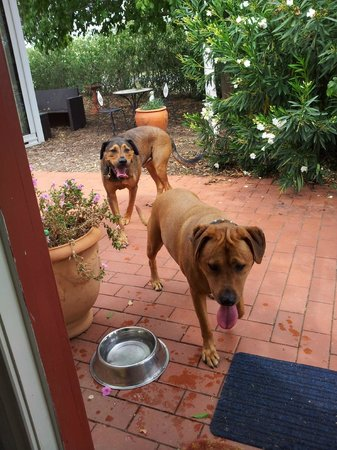 Must Love Dogs B&B & self contained cottage: Our Roomies