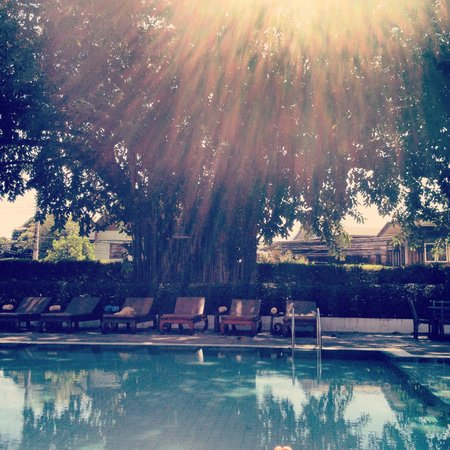 Rimping Village: pool under the beautiful tree