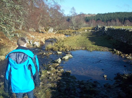 Wildside Highland Lodges: Stepping Stones on the red squirrel walk