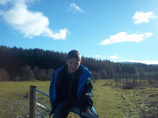 Wildside Highland Lodges: The Red squirrel walk