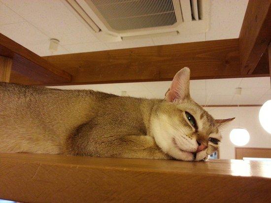 Tsukuba Wanwan Land : 猫の部屋もあります。