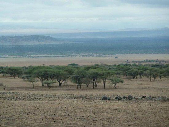 Ndutu Safari Lodge: dintorni