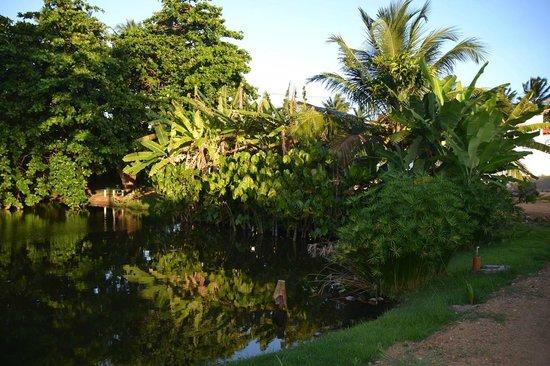 Alma Tropical Resort: Lagoa