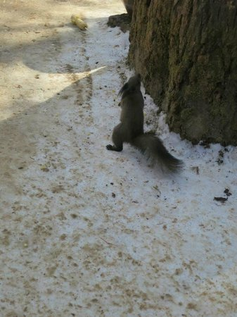 Nami Island: the wildlife!