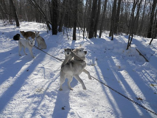 Wolfsong Adventures in Mushing: Ready to go