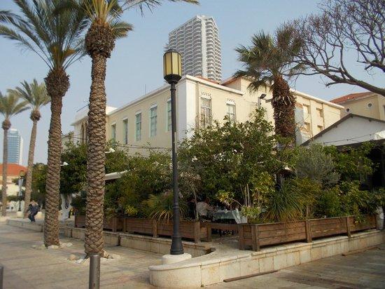 Neve Tzedek: Palms in Suzanne Dellal square 1