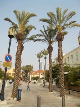 Neve Tzedek: Palms in Suzanne Dellal square