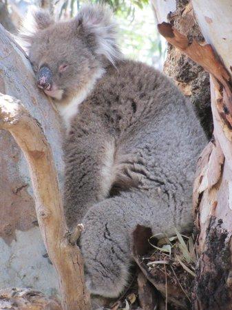 Exceptional Kangaroo Island: too hot!