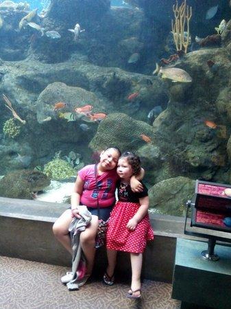 The Florida Aquarium : We love it