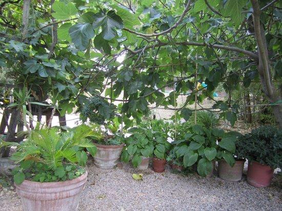 IL Casettino - Casa Vacanze