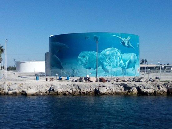 The Florida Aquarium : Nice