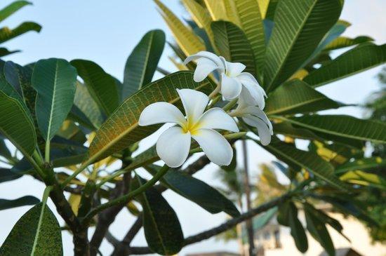 Samui Pier Resort: Прикольные цветочки
