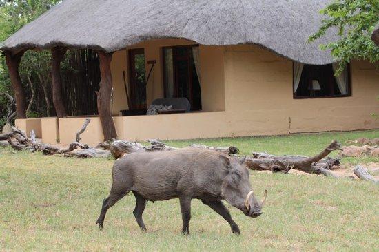 Kambaku Safari Lodge: Wild life at your door step