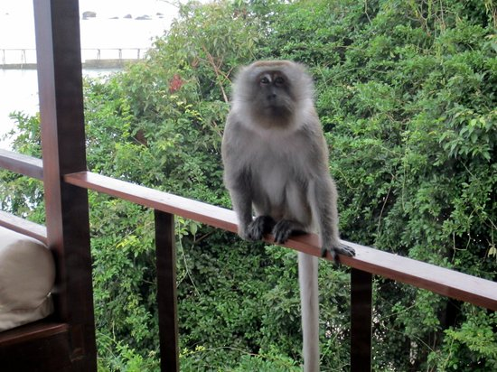 Japamala Resort by Samadhi: Morgendlicher Besuch!