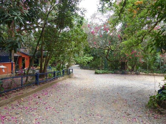Jinka Resort grounds