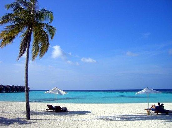 Maafushivaru: Beautiful white beaches - view from the bar