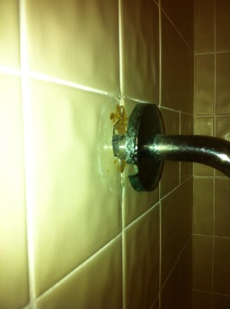 Clarion Inn & Suites At International Drive: Shower