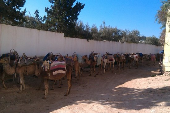 Hotel Marhaba Beach: Camel caravan