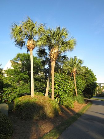 Litchfield Beach & Golf Resort: Very well maintained properties
