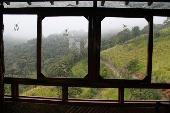 San Jorge de Tandayapa Hummingbird Sanctuary & Lodge: View from Tandayapa San Jorge Exo Lodge