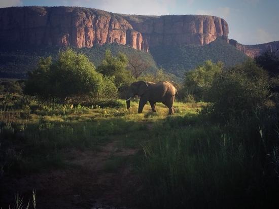 Marataba Safari Lodge: Our first photo of the whole trip!!